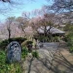 早春の麻生区・浄慶寺 作者 白浜