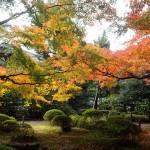 京都青蓮院の紅葉 作者水山